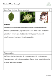 2.1.1 Steckbrief 05 Roter Hartriegel