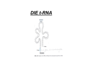 DIE t-RNA - Biochemie Trainingscamp
