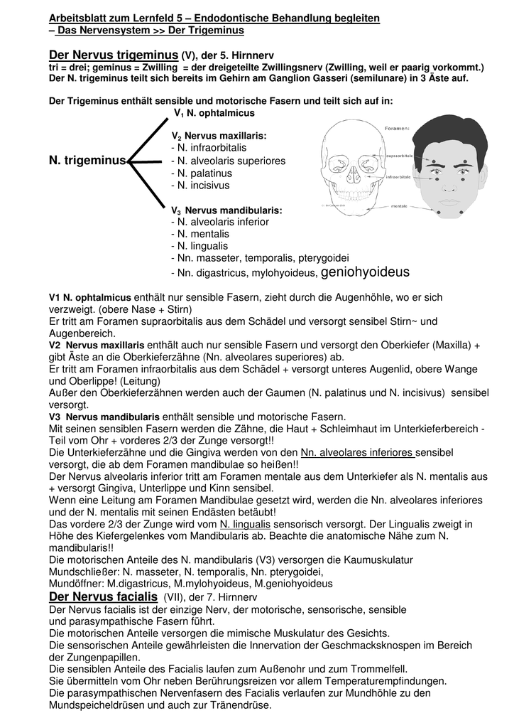 06b Arbeitsblatt - Trigeminus+Facialis
