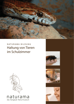 Schulzimmer Zoo-Homepage.indd