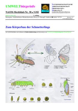 Schmetterlinge - Forschungsstelle Rekultivierung