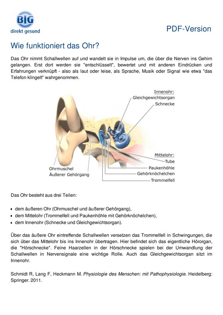 Wunderbar Trommelfells Anatomie Galerie - Anatomie Ideen - finotti.info
