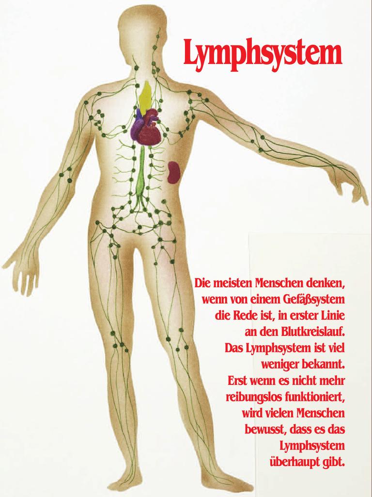 Wunderbar Das Lymphsystem Fotos - Menschliche Anatomie Bilder ...