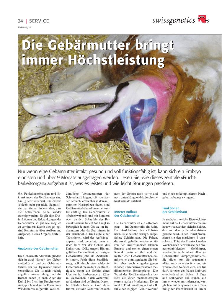 Ausgezeichnet Anatomie Der Kuh Zeitgenössisch - Menschliche Anatomie ...
