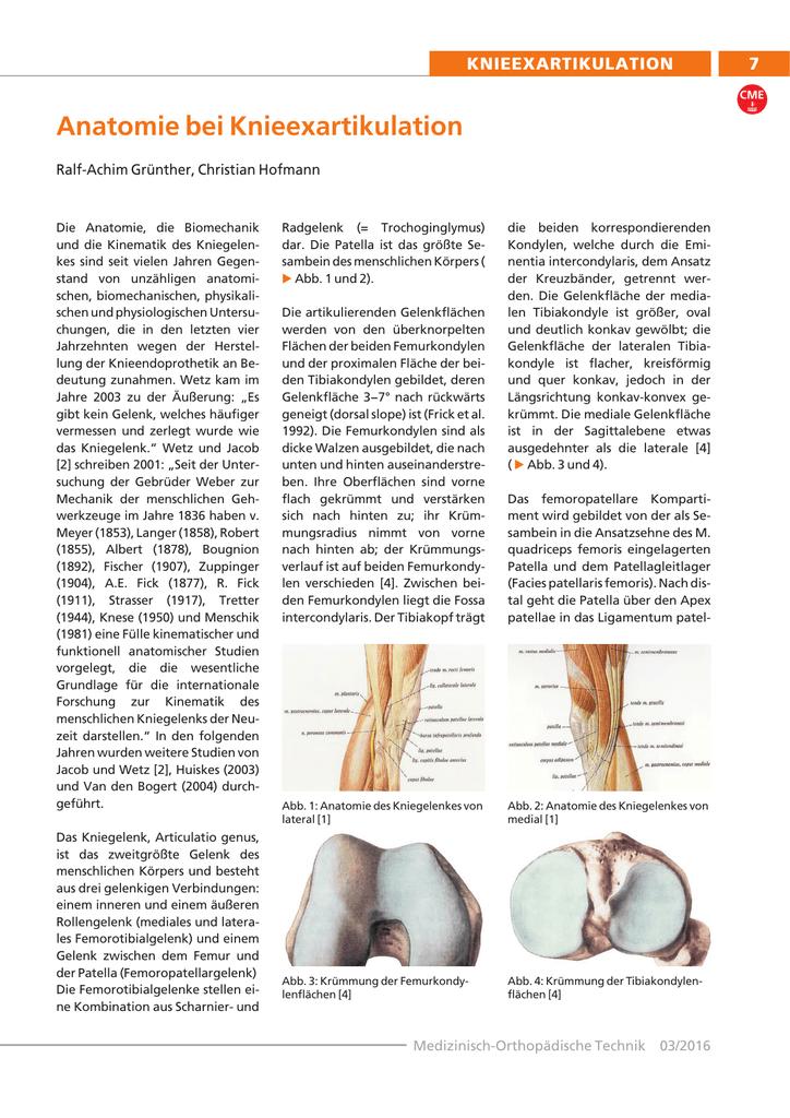 Anatomie bei Knieexartikulation - CME-Online