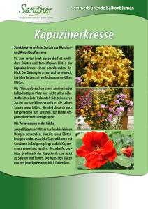 Euphorbia Leuconeura Kaktee Madagaskar Wolfsmilch blühende Pflanze 10 Körner