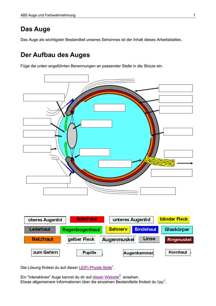 Das Auge Der Aufbau des Auges