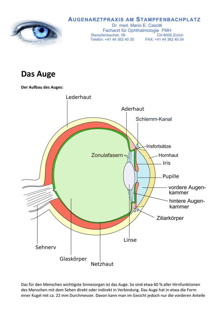 Ziemlich Inneres Auge Anatomie Galerie - Anatomie Ideen - finotti.info