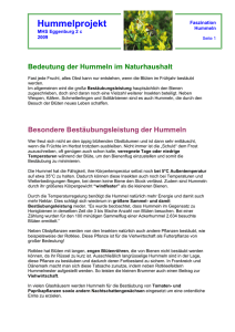 Hummelprojekt - nmseggenburg.ac.at