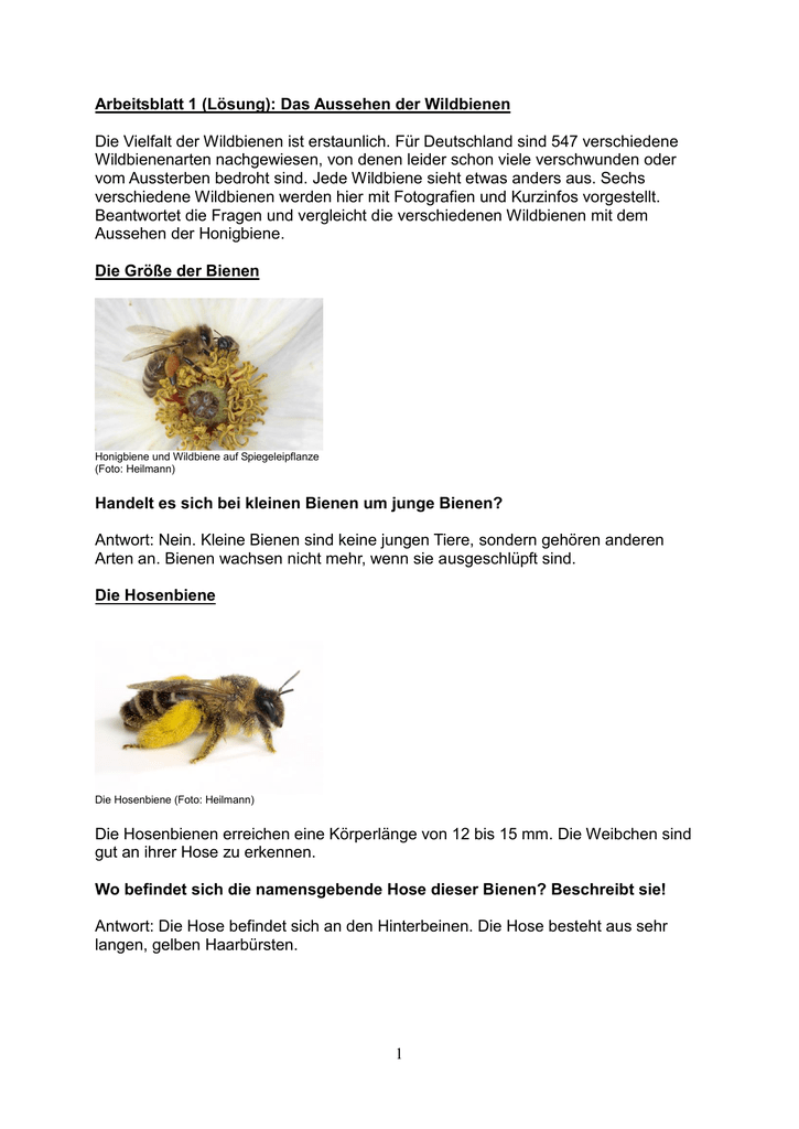 Erfreut Biene Film Arbeitsblatt Fotos - Mathe Arbeitsblatt ...