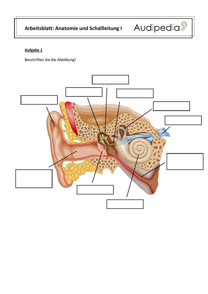 arbeitsblatt anatomie und schallleitung i. Black Bedroom Furniture Sets. Home Design Ideas