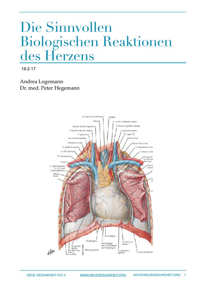 Großzügig Gefäße Des Herzens Anatomie Galerie - Anatomie Ideen ...