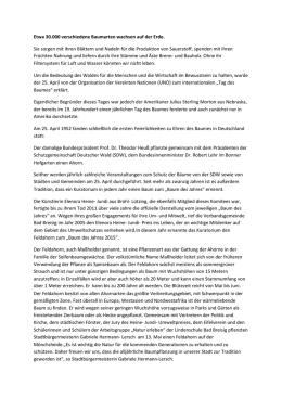 Der Feldahorn | Acer campestre - Schutzgemeinschaft Deutscher Wald