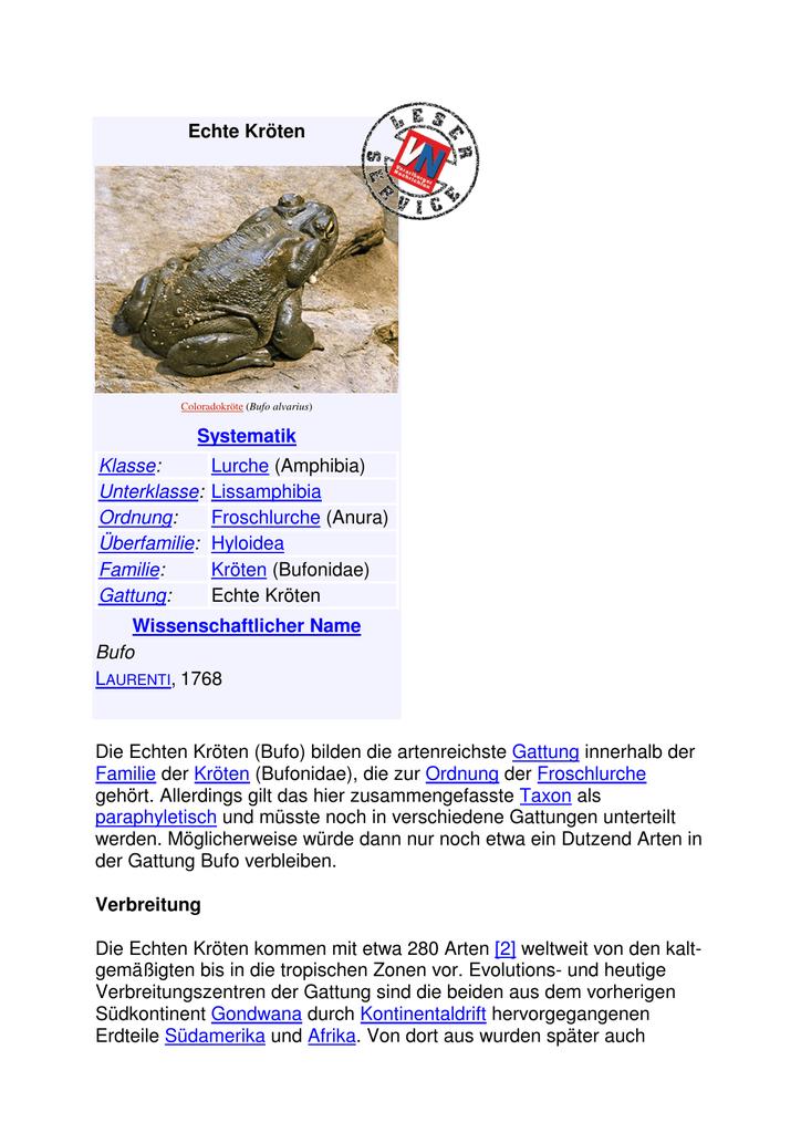 Echte Kröten Systematik Klasse: Lurche (Amphibia) Unterklasse