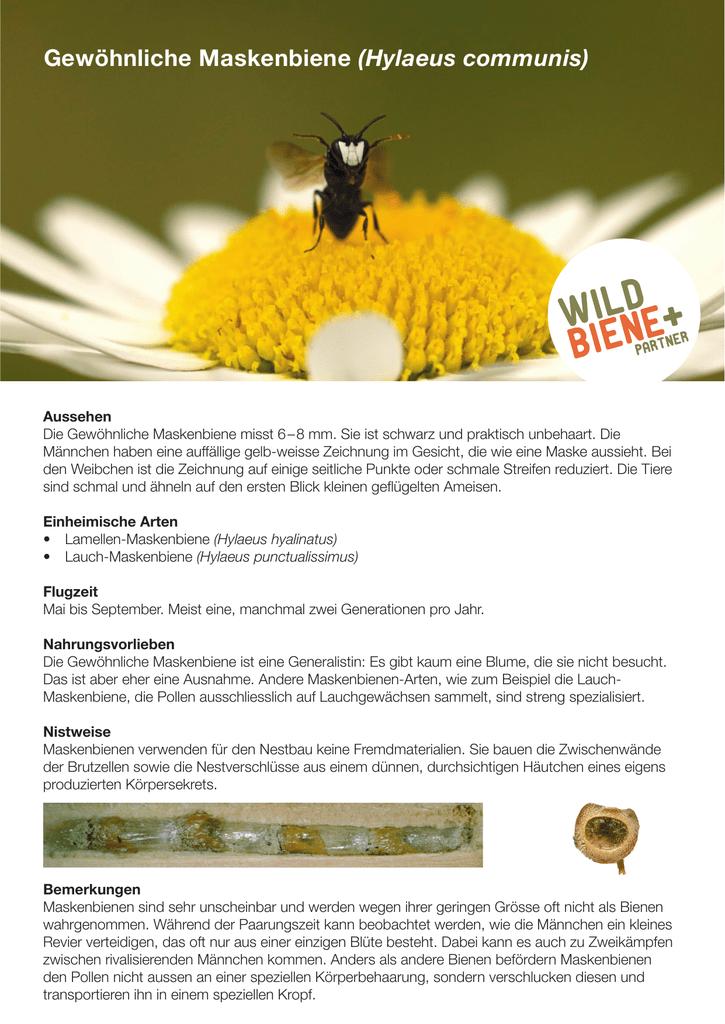 Bienen Partner informationen wildbiene partner