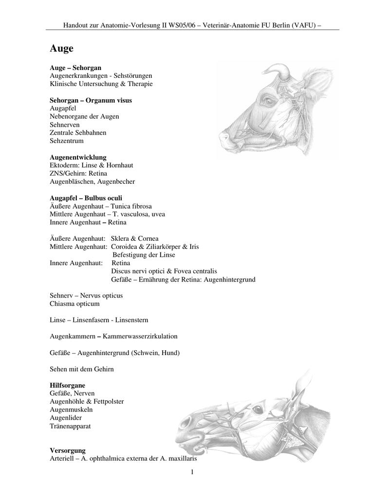 Ungewöhnlich Schwein Auge Anatomie Ideen - Anatomie Ideen - finotti.info