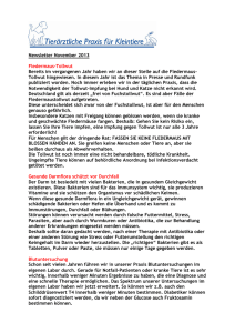 Newsletter November 2013 Fledermaus