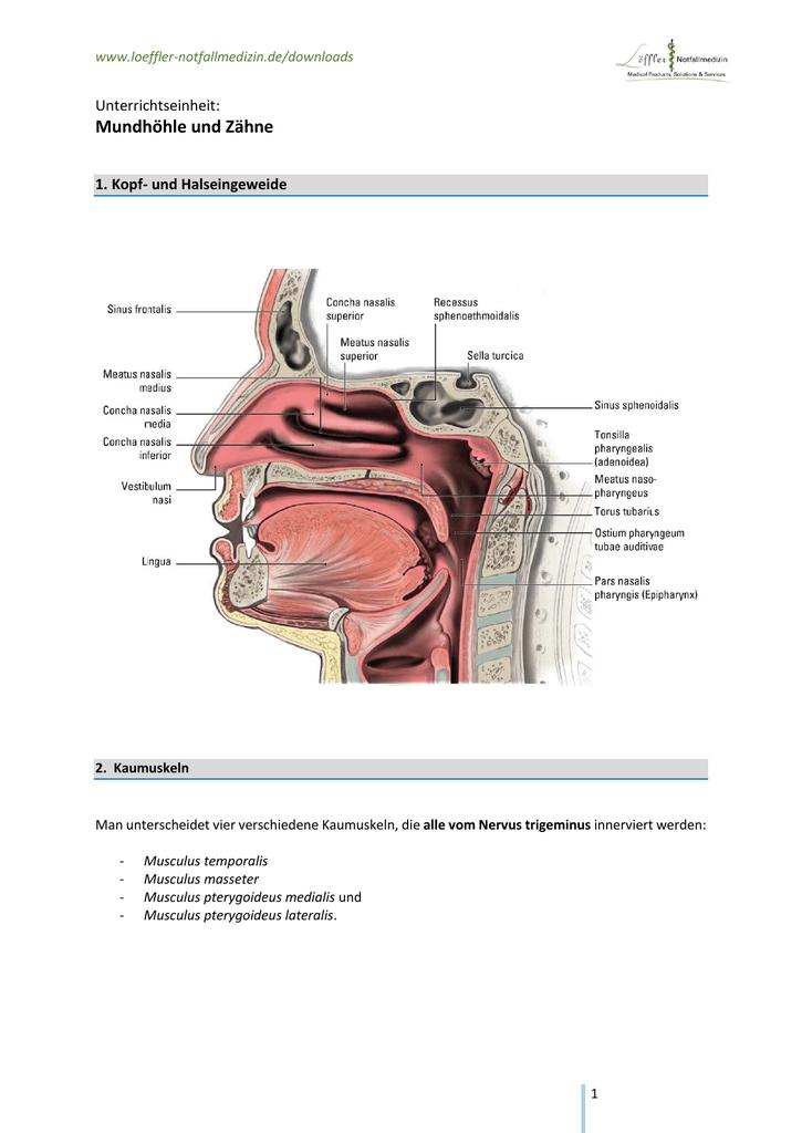 Ausgezeichnet Bild Des Menschlichen Darms Ideen - Anatomie Ideen ...