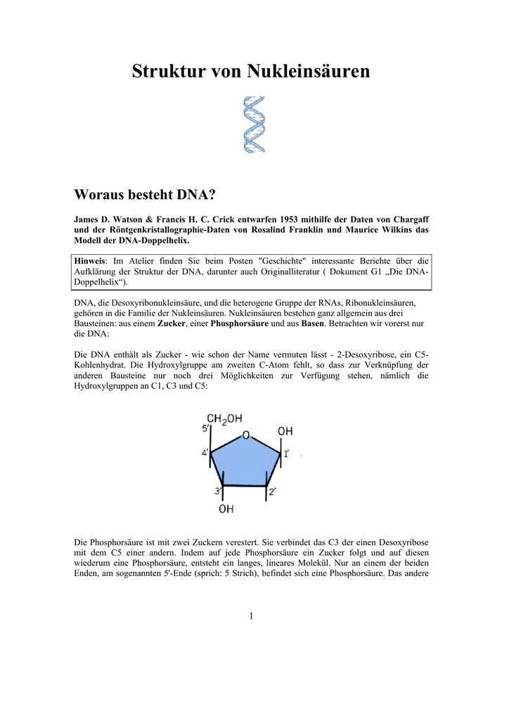 basenpaarung adenin thymin