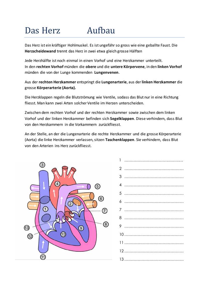 Erfreut Linke Lungenarterie Zeitgenössisch - Anatomie Ideen ...