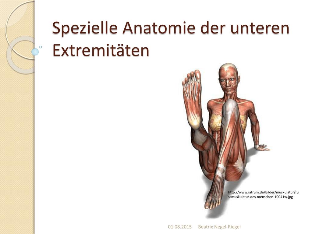 Groß Anatomie Der Unteren Extremitäten Muskeln Fotos - Anatomie ...