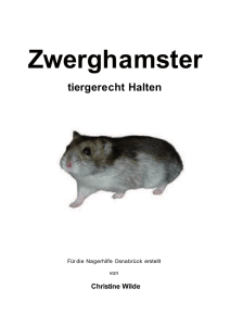 Zwerghamster - Hamsterforum