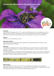 Informationen  - Wildbiene + Partner