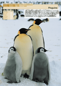 Pinguine - Visual Bridges