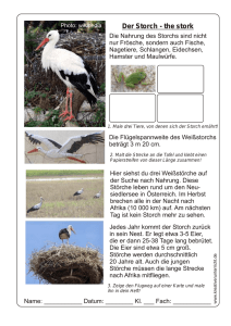 Der Storch-the stork