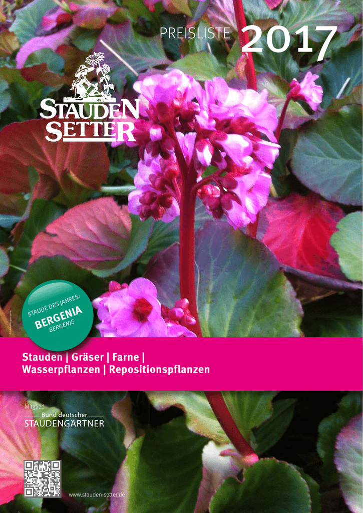 Katzenminze Nepeta grandiflora /'Dawn to Dusk/' Bienenpflanze rosa Staude