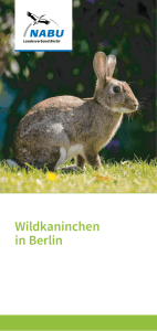 Wildkaninchen in Berlin