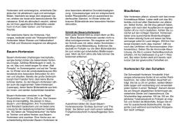 Hortensien Im Schatten hortensien sommerlicher blütentraum
