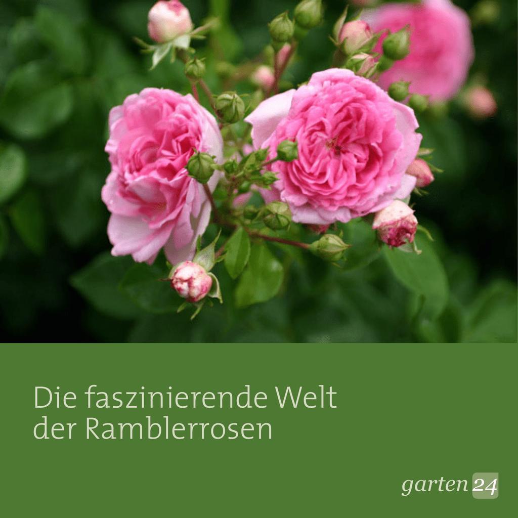 Garten24