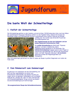 Schmetterlinge Druckversion 2