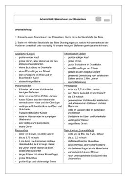 Arbeitsblatt: Stammbaum der Rüsseltiere Arbeitsauftrag: 1. Entwerfe