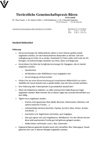 Steckbrief Wellensittich
