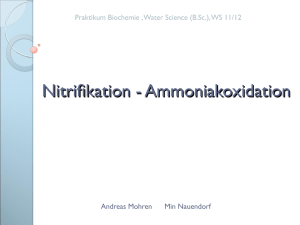 Nitrifikation - Ammoniakoxidation
