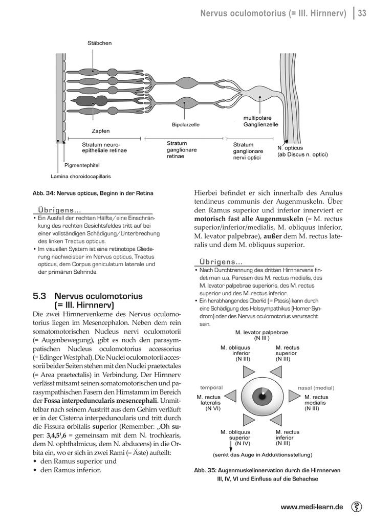 Beste Augenmuskeln Galerie - Menschliche Anatomie Bilder ...