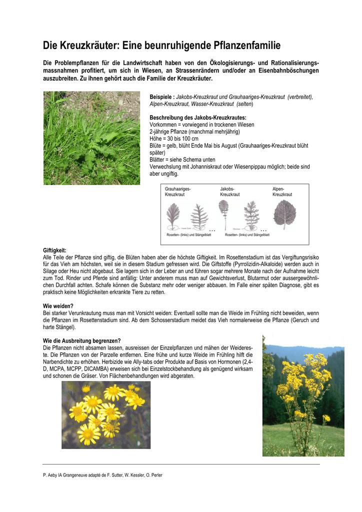 die kreuzkruter eine beunruhigende pflanzenfamilie - Einkeimblattrige Pflanzen Beispiele