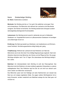 Name: Dreistacheliger Stichling