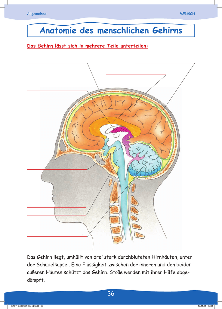 Großartig Gehirn Anatomie Und Funktion Interaktiv Fotos - Anatomie ...