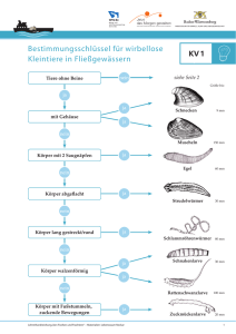 DownloadKopiervorlage 1