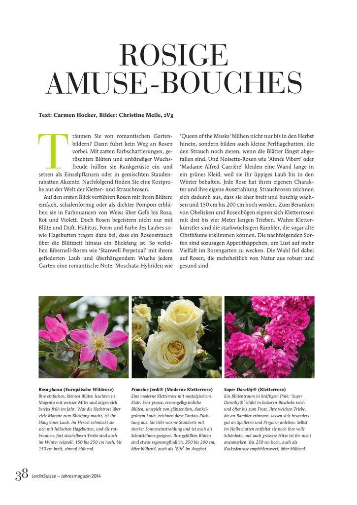 """zart und romantisch gefüllte Blüten Akelei /""""Pink Pompon/"""""""