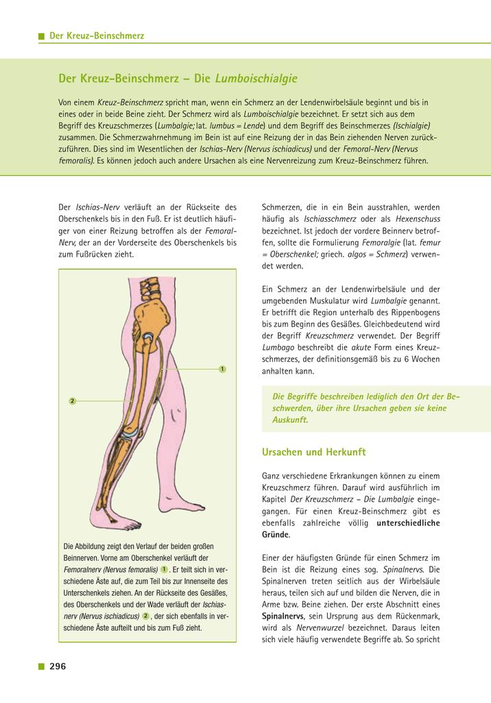 Ziemlich L5 Nervenwurzel Anatomie Bilder - Menschliche Anatomie ...