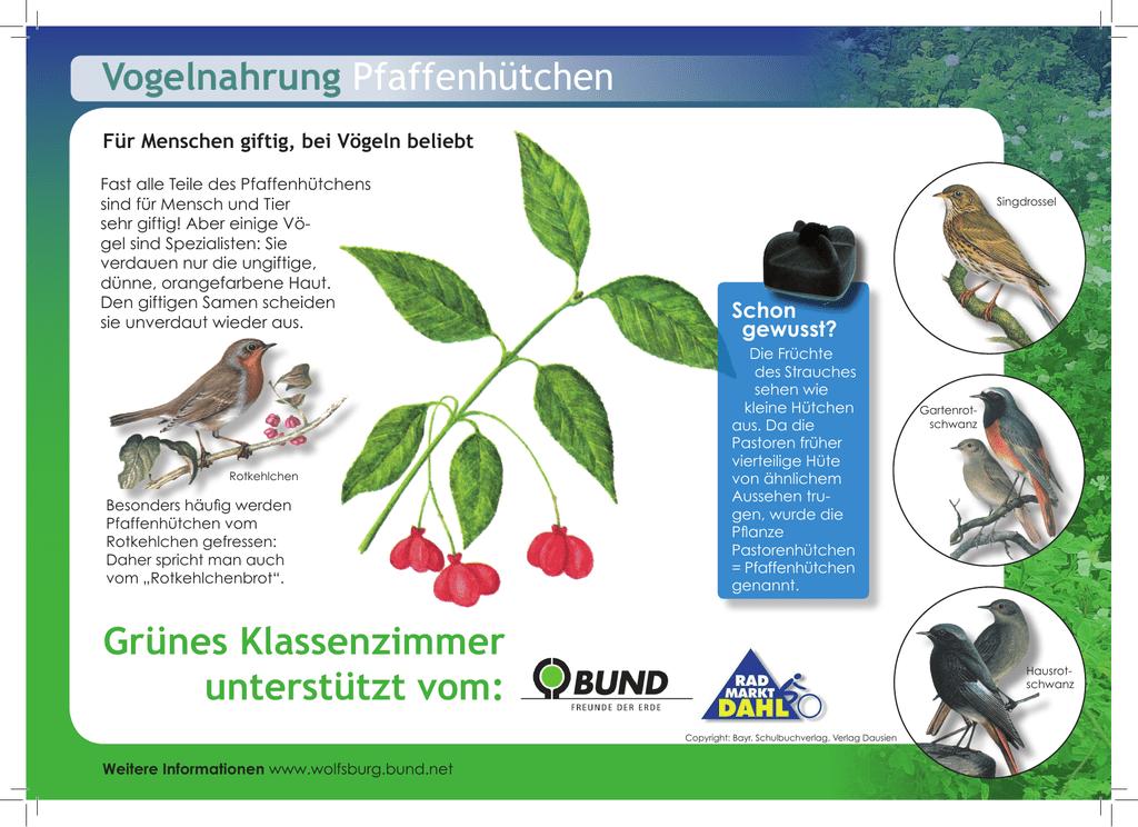 für vögel giftige pflanzen