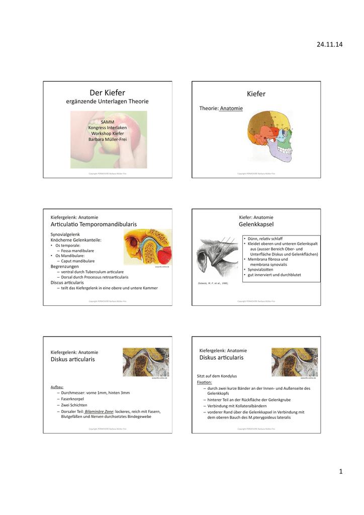 Groß Eckzahn Kieferanatomie Zeitgenössisch - Anatomie Ideen ...