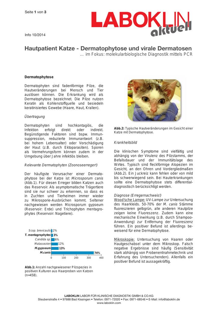 organversagen hund symptome
