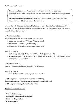 Arbeitsblatt - NGFN-2