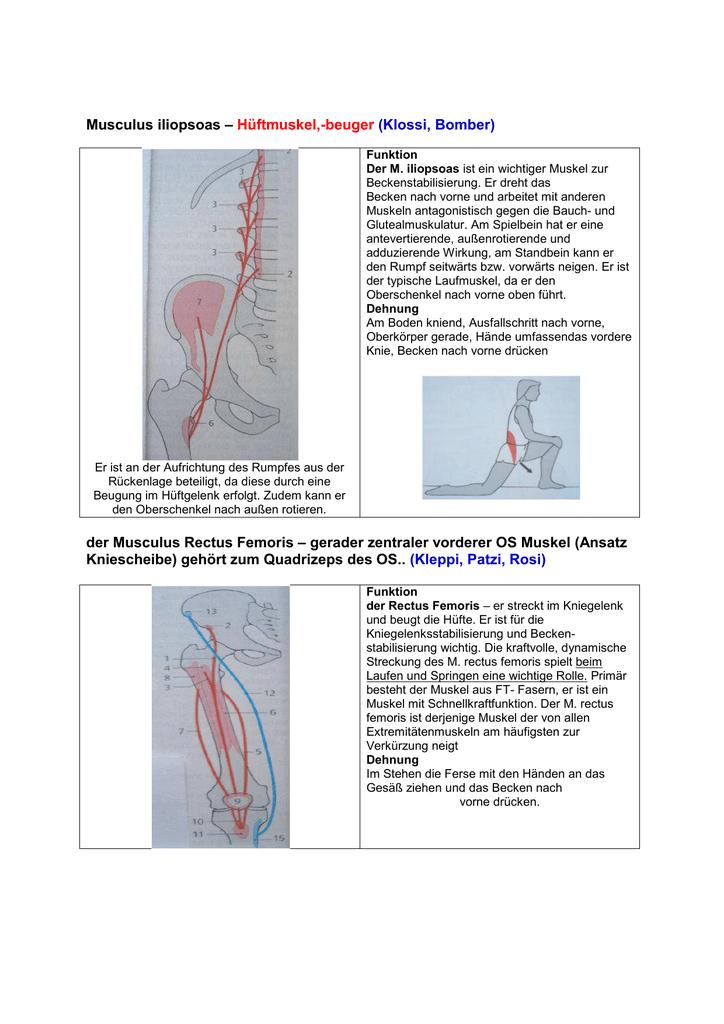 Fein Diagramm Hüftgelenk Galerie - Menschliche Anatomie Bilder ...