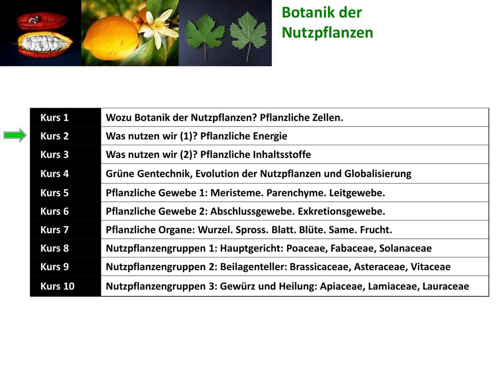 Botanik der Nutzpflanzen